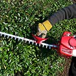 services-hedge-trimming