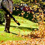 services-leaf-removal